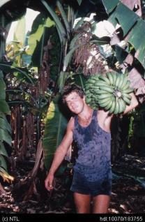 banana picking
